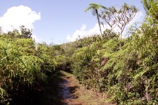 Sentier de l'Eden à Bras-Panon La Réunion