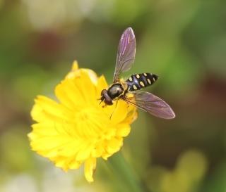 Insectes de La Réunion.