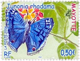 Papillon : Junonia rhadama