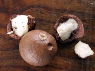 Noix du Queensland. Noix de macadamia.