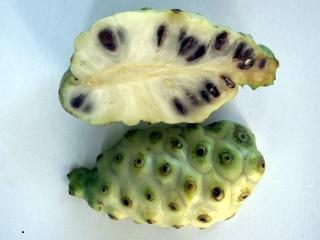 Fruit. Morinda citrifolia L.