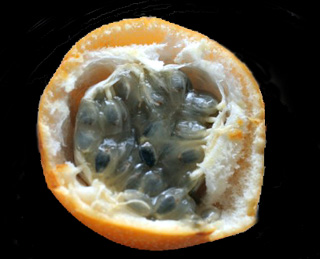 Fruit Passiflora ligularis