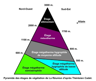 Pyramide des étages de la végétation de La Réunion.