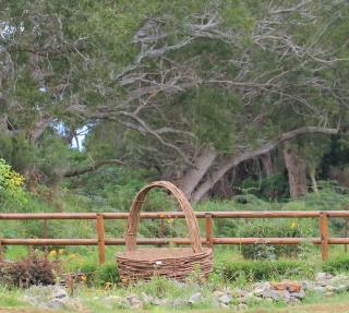 Forêt de tamarins du Piton Ravine Blanche.