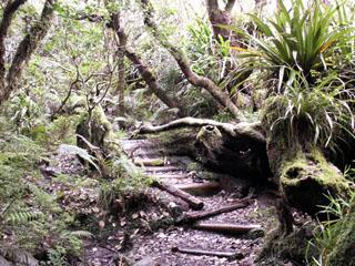 Randonnée sentier marmaille Notre Dame de La Paix île de La Réunion.