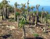 Le Jardin Naturel, Saint-Leu La Réunion
