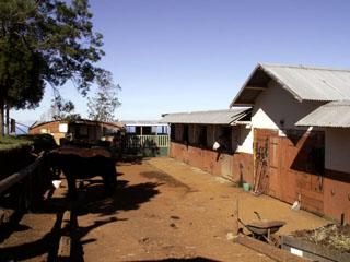 Centre équestre Domaine du Relais Petite-île à La Réunion