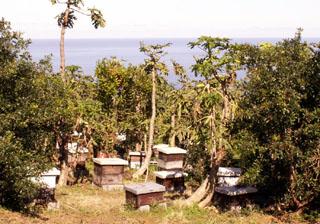 Maison de l'abeille ruches à Petite-île La Réunion