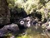 Bassin Canne Sainte-Suzanne La Réunion