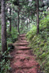 Sentier cascade Maniquet La Réunion