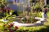 Bassin et jardin : Maison Orré Saint-Pierre La Réunion