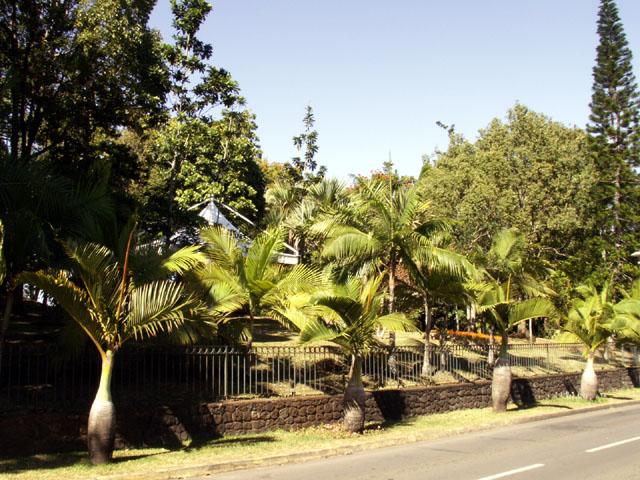 Arboretum Entre-Deux La Réunion