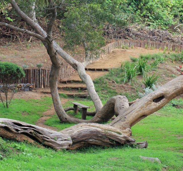Forêt de tamarins du Piton Ravine Blanche La Réunion.