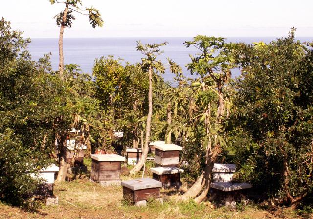 Maison de l'abeille Petite-île