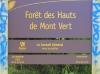 Forêt des Hauts de Mont-Vert La Réunion.