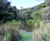 Randonnée dans la Forêt des Hauts de Mont-Vert La Réunion.