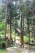 Forêt du Rond Plaine des Grègues