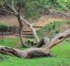 Randonnée Forêt de tamarins du Piton Ravine Blanche La Réunion