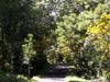 Sentier botanique de la forêt de Mare Longue