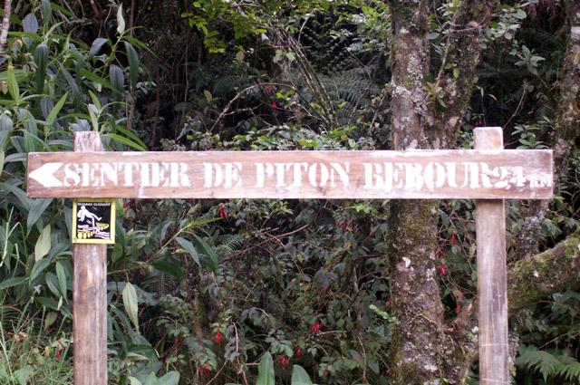 Randonnée : Sentier du Piton Bébour. Secteur : Plaine des Palmistes La Réunion
