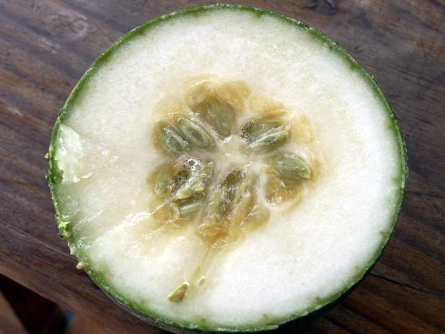 Fruit : Calebasse sauvage ou melon sauvage. Lagenaria sphaerica