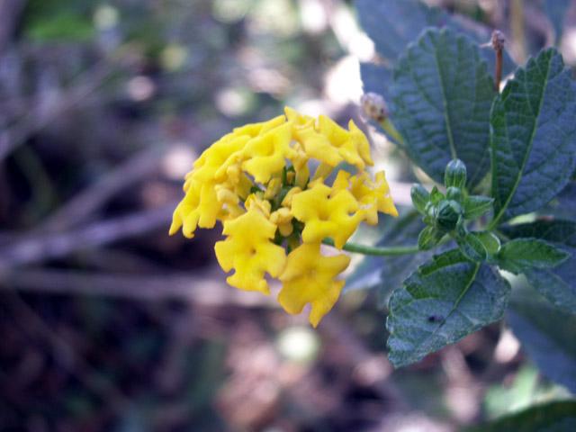 Galabert Corbeille d'or : Fleurs