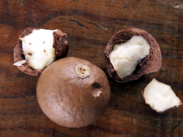 Fruits : Macadamier ou Noyer du Queensland - Macadamia integrifolia