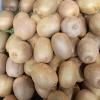 Actinidia deliciosa (A.Chev.) C.F.Liang & A.R.Ferguson Kiwi ou Groseille de Chine