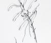 Angraecum germinyanum Hook. f