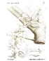 Angraecum palmiforme Thouars