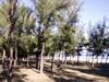 Forêt domaniale et départemento-domaniale d'Étang-Salé