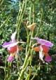 Le Jardin des Orchidées, Saint-Joseph
