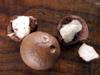 Fruits : Macadamier ou Noyer du Queensland - Macadamia integrifolia