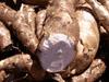 Manihot esculenta Crantz
