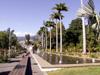Palmier colonne ou Caraïbes Royal Palm Roystonea oleracea