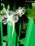 Fleur et fruit de patolle de patolle, Trichosanthes cucumerina.