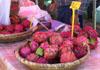 Hylocereus undatus (Haw.) Britton et Rose Pitahaya, pitaya, Fruit du Dragon