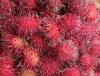 Nephelium lappaceum L