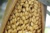 Syagrus coronata (Mart.) Becc