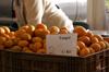 Citrus reticulata et Citrus sinensis
