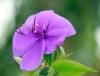 Fleur de couleur violette.