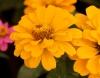 Fleur de couleur orange.