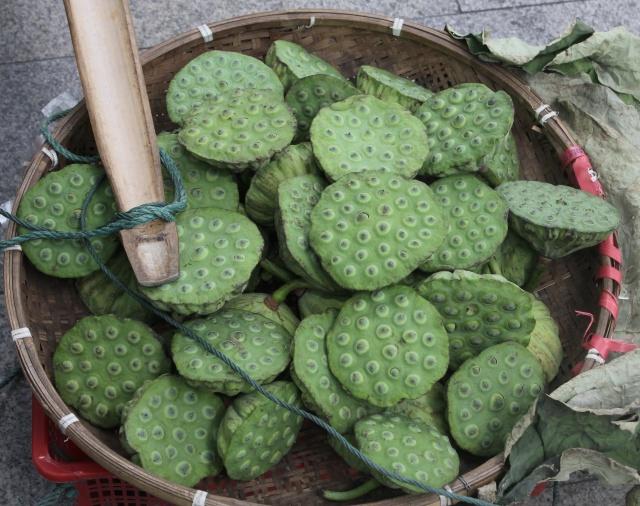 Fruits : Nelumbo nucifera Gaertn.
