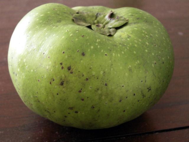 Diospyros nigra. Sapotier Sapote.