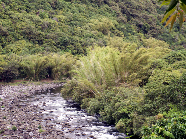 Rivière des Marsouins îlet Bethléem Saint-Benoît