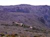 Gite du Volcan vue depuis le sentier du Piton Partage