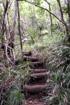 Piton Montvert La Réunion. Sentier de randonnée