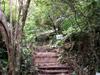 Sentier botanique du Piton des Songes Plaine des Palmistes