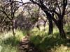 Sentier menant au Piton Partage