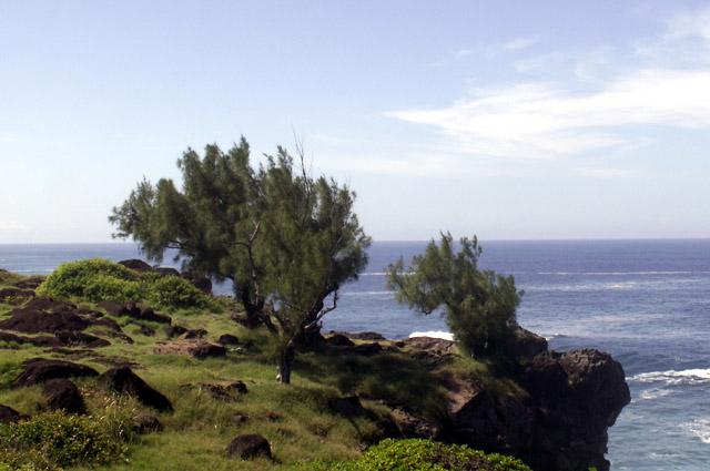 Sentier du littoral de Terre Rouge Filaos et Océan Indien